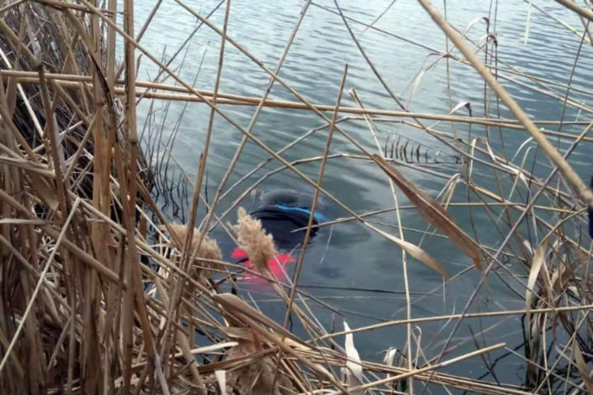 The corpse of an elderly woman was taken out of the reservoir near the Dnieper. News of the Dnieper